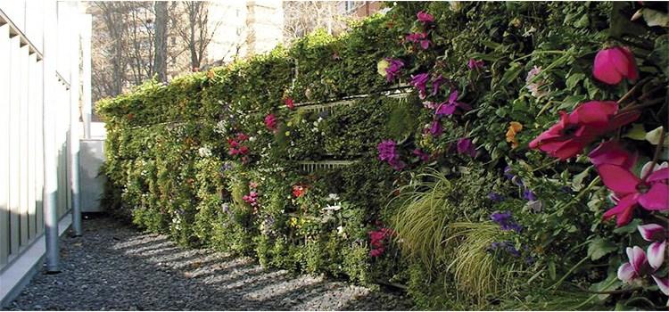 Els jardins verticals: què són i algunes idees